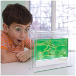 Photo of little boy with cross section of ant farm